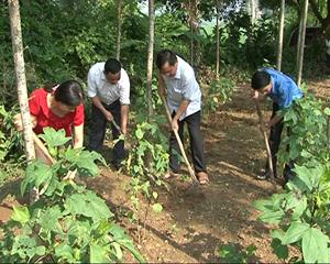 Nhiều gia đình ở xã Cao Dương (Lương Sơn) cải tạo đất vườn để trồng cây dược liệu.