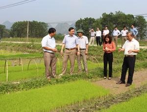 Đoàn kiểm tra sản xuất tại xã Đồng Tâm (Lạc Thủy).