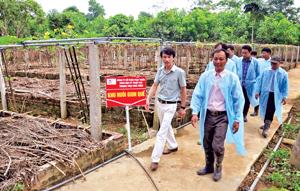 Khu vực nuôi giun quế nguồn thức ăn cho lợn, gà rừng của Công ty CP Phát triển khoa học - kỹ thuật Việt Nam.