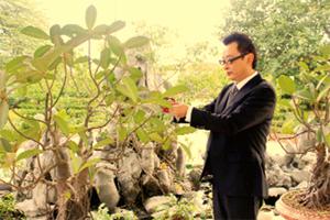Ông Korikawa Takeru chăm sóc cây cảnh đón Tết Việt.