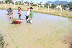 """Máy cấy mini của """"kỹ sư"""" Nguyễn Thái Học đang thu hút sự quan tâm của nông dân"""