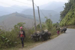 Sau đợt rét đậm, rét hại nhiều người dân xã Tân Minh (Đà Bắc) quan tâm hơn đến việc chăn thả trâu, bò.