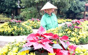 Chị Nguyễn Thị Thủy, tổ giao thông – cây xanh – Công ty CP đô thị Hòa Bình chăm sóc những bồn hoa rực rỡ trang hoàng đường phố ngày xuân.