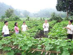 Trung tâm Ứng dụng tiến bộ khoa học và công nghệ chuyển giao kỹ thuật trồng susu lấy ngọn tại xã Ba Khan, huyện Mai Châu.