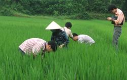 Kiểm tra tình hình sâu bệnh hại trên cây lúa vụ xuân 2010 tại huyện Lạc Thuỷ