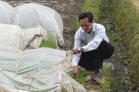 Cán bộ Trạm KN-KL Mai Châu kiểm tra chất lượng sinh trưởng của mạ tại cơ sở.