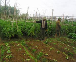 Một số hộ ở khu 1B, thị trấn Mường Khến (Tân Lạc) tham gia sản xuất nông nghiệp hữu cơ áp dụng đúng quy trình.