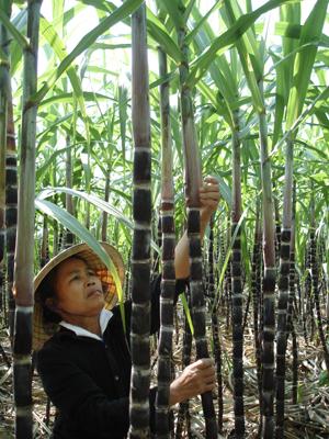 Nhờ chuyển đổi cơ cấu cây trồng, vật nuôi theo hướng hàng hoá, đời sống người dân xã Đông Phong (Cao Phong) đã từng bước được nâng lên, tạo tiền đề xây dựng đời sống văn hoá.