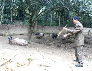 CCB Nguyễn Văn Tún, xã Mông Hoá (Kỳ Sơn) chăm sóc đàn gia súc tại trang trại của gia đình.
