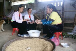 Bà Phương hướng dẫn các hội viên trong HTX Vọng Ngàn cách làm men lá rượu cần truyền thống.