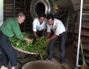 Hội viên chi hội CCB xóm Trà Đáy, xã Pà Cò (Mai Châu) phát triển kinh tế từ mô hình sản xuất chè.