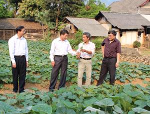 Đoàn công tác BCĐ 800 T.Ư thăm mô hình chuyển đổi cơ cấu sản xuất tại xóm Cha Long, xã Tòng Đậu.