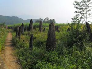 Khu mộ cổ Đống Thếch ở xã Vĩnh Đồng (Kim Bôi) thiếu sự quản lý nên nhiều người dân sử dụng một phần diện tích để trồng cây màu. Ảnh:T.L