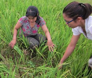 Nhiều khoảnh ruộng của xã Chiềng Châu (Mai Châu) đang thiếu nước nghiêm trọng.