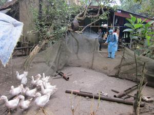 Tổ chức vệ sinh, tiêu độc khu vực chuồng trại nuôi gia cầm xã Bắc Phong (Cao Phong).