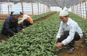 Xã Kim Sơn tích cực tuyên truyền nhân dân tham gia trồng rừng phủ xanh đất trống đồi trọc, khai thác nguồn lợi từ rừng. Năm 2013, xã trồng mới 68,8 ha rừng. ảnh: Nông dân xã Kim Sơn (Kim Bôi) chăm sóc cây giống trồng rừng.