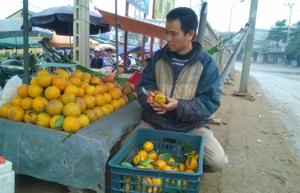 Một hộ kinh doanh cam địa phương trên địa bàn thị trấn Cao Phong lo ngại về tình trạng một số hộ trà trộn cam Trung Quốc với cam Cao Phong gây ảnh hưởng đến uy tín và môi trường cạnh tranh lành mạnh.