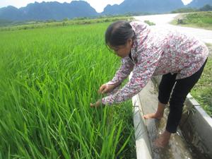 Cán bộ Trạm BVTV huyện Kim Bôi thường xuyên kiểm tra đồng ruộng để đảm bảo chất lượng công tác dự tính dự báo sâu bệnh hại lúa chiêm xuân (Ảnh: kiểm tra đồng ruộng trên địa bàn xã Vĩnh Đồng).