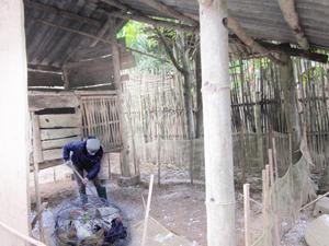Hộ dân xã Tây Phong (Cao Phong) thường xuyên vệ sinh, quét dọn, rắc vôi bột quanh khu vực chuồng nuôi để phòng bệnh cho gia cầm.