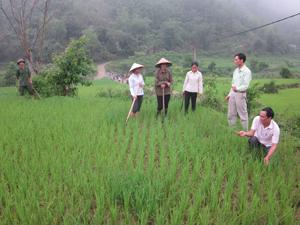 Phòng Kinh tế thành phố Hòa Bình kiểm tra, rà soát diện tích lúa đã cấy có nguy cơ bị hạn, hướng dẫn bà con khắc phục hạn cho lúa.