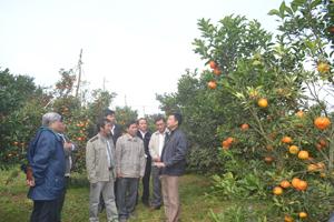 Lãnh đạo Công ty TNHH MTV Cao Phong  giới thiệu về cam Cao Phong với đoàn công tác tỉnh Đồng Tháp.