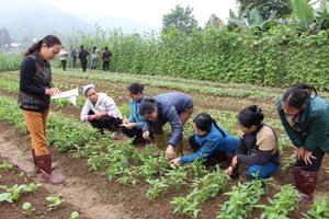 Học viên nông dân xã hưởng lợi được huấn luyện, thực hành điều tra sâu bệnh tại hiện trường sản xuất.