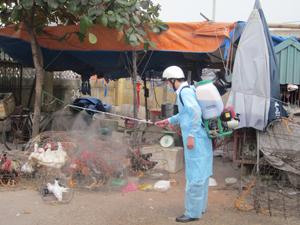 Trạm thú y thành phố Hòa Bình thường xuyên phun thuốc khử trùng tiêu độc khu vực buôn bán, giết mổ tập trùng để chủ động phòng dịch cúm gia cầm.