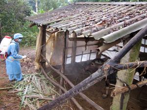 Tổ chức phun tiêu độc 2 lần/ngày nhằm ngăn chặn phán tán mầm bệnh tại xã Xăm Khòe (Mai Châu).