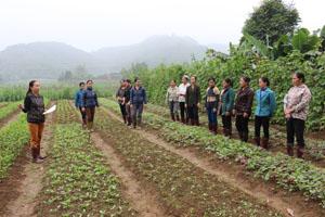 Bà Hoàng Thị Khuyên, tổ trưởng tổ BVTV xã Tân Vinh (Lương Sơn) hướng dẫn kỹ thuật trồng trọt xen canh theo phương pháp FFS.
