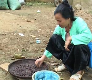 Người dân xóm Be Trên, xã Chí Đạo (Lạc Sơn) phơi hạt dổi sau khi thu hoạch.