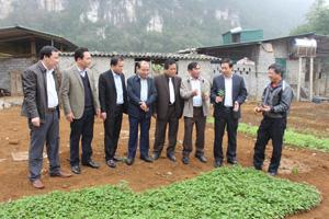Đồng chí Bùi Văn Cửu, Phó Chủ tịch Thường trực UBND tỉnh tìm hiểu tình hình Liên kết đối tác trồng và tiêu thụ cây Cà gai leo tại xóm Ráng (Đa Phúc)