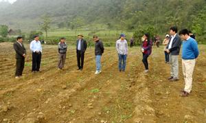 Đại diện Ban điều phối trung ương, Ban QLD án giảm nghèo tỉnh, huyện và Công ty mía đường Hòa Bình kiểm tra thực tế trống mía đường tại xóm Cha xã Ngọc Sơn.