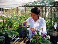 Nghiên cứu viên Lã Thị Thu Hằng đã tự bỏ tiền túi để thực hiện đề tài nuôi trồng hoa chuông.