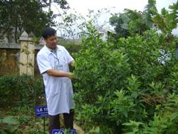 Vườn thuốc nam luôn được trạm phát triển phục vụ cho công tác chữa bệnh