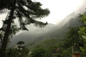 Rừng ở xã Tú Sơn (Kim Bôi) được nhân dân bảo vệ chặt chẽ.