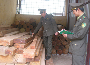 Lực lượng kiểm lâm huyện Mai Châu lập biên bản xử lý các trường hợp buôn bán, vận chuyển gỗ trái phép.