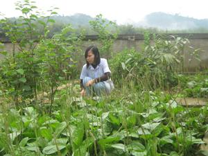 Cây thuốc nam luôn được hội Đông y huyện Mai Châu quan tâm chăm sóc.