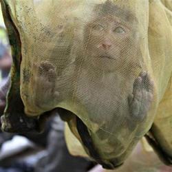 Một con khỉ bị bắt trong rừng tại Campuchia.