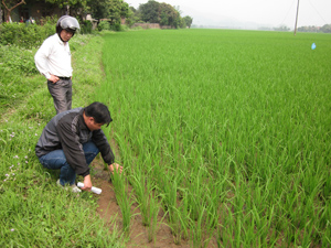 Công ty Khai thác công trình thủy lợi Hòa Bình phối hợp với tổ vận hành hồ Ngọc và cán bộ giao thông - thủy lợi xã Trung Minh kiểm tra thực tế lúa hạn, thiếu nước tại xóm Ngọc.
