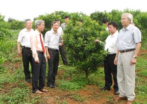 Lãnh đạo huyện Cao Phong kiểm tra việc triển khai thực hiện Nghị quyết Đại hội Đảng bộ huyện về phát triển diện tích trồng cây ăn quả có múi tại thị trấn Cao Phong.  ảnh: Minh Tuấn