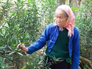 Bà Ẻ ra vườn bẻ cành cây vào minh chứng cho phương pháp phá thai của mình.