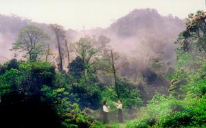 Thiếu nữ bên rừng xuân. Ảnh: Quốc Dũng (T.T.V)
