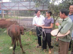 Hội Bảo trợ NTT và TMC tỉnh trao tặng bò sinh sản cho hộ khuyết tật xã Đồng Tâm (Lạc Thủy).