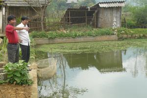 Từ nguồn vốn hỗ trợ phát triển sản xuất của chương trình NTM, xã Tòng Đậu đã triển khai thực hiện 2 mô hình nuôi gà và cá đạt hiệu quả kinh tế.   Ảnh: Ao cá của gia đình anh Hà Văn Khương, xóm Cha, xã Tòng Đậu thả hơn 600 con giống các loại. Hiện, đàn cá sinh trưởng tốt, sắp cho thu hoạch.