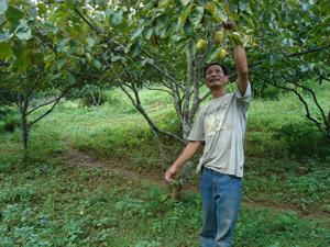 Bỏ được ma túy, anh Giang ở lại đảo lập nghiệp bằng việc trồng rừng, cây ăn quả và chăn nuôi.