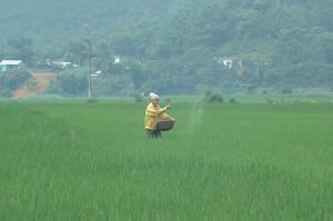 Nhân dân xóm Hạ Sơn, xã Tú Sơn (Kim Bôi) chăm sóc lúa chiêm xuân 2012.