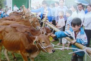 Trao bò sinh sản cho các hộ gia đình khuyết tật xã Phúc Tiến - Kỳ Sơn.