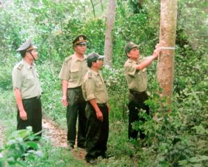 Lực lượng kiểm lâm huyện Lương Sơn tiến hành  kiểm tra, đo độ tăng trưởng của cây rừng.