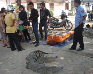 Cá sấu được xẻ thịt và bán ngay trên vỉa hè đường Hoàng Văn Thụ, phường Hữu Nghị, TP Hòa Bình.