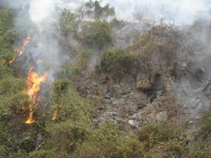 Ngọn lửa do sét đánh đã thiêu rụi khoảng 2ha rừng tái sinh trên núi Tam Tòa, thôn An Phú, xã Phú Lão (Lạc Thủy).